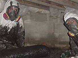 Sewage Remediation Services